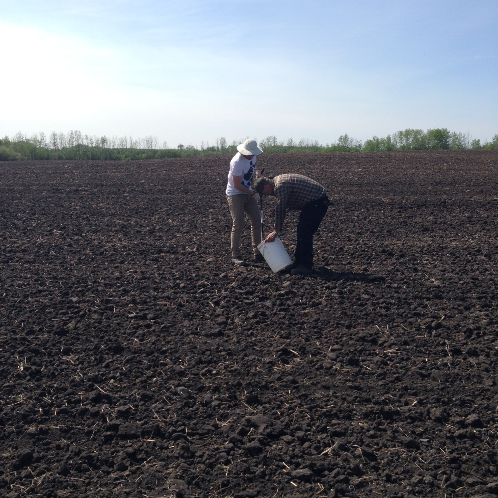 Al and Chad Soil Sample