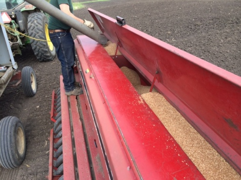 Al filling the seed drill.